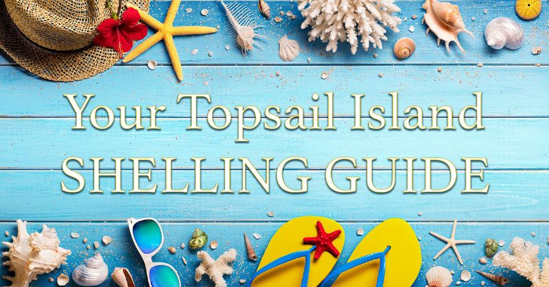 Topsail Island Shelling Guide