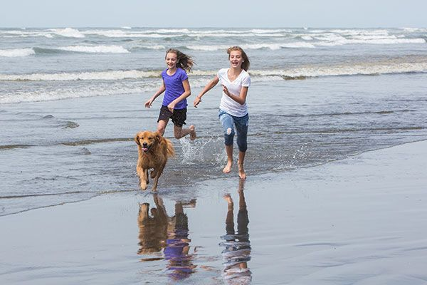 Kids and Dog at the Beach