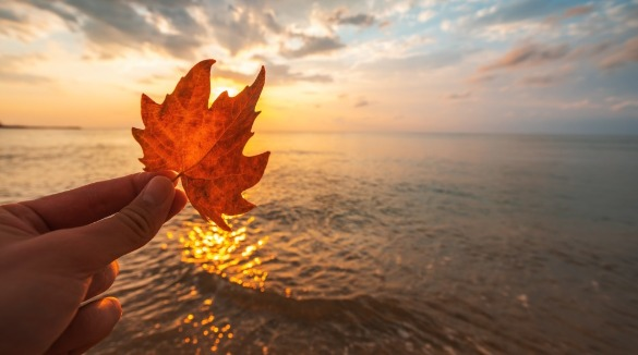 person holding leaf on the beach during autumn | Century 21